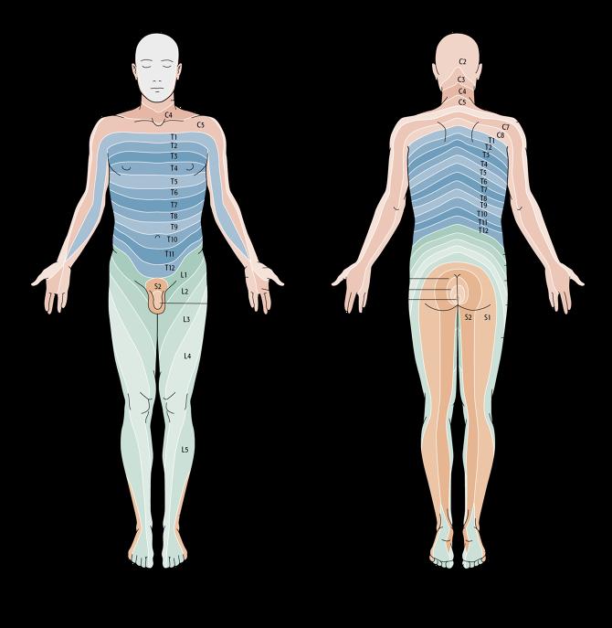 Dermatom, Patientenlagerung … - Minks –– Illustration und Grafik in ...